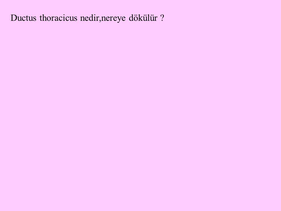 Ductus thoracicus nedir,nereye dökülür