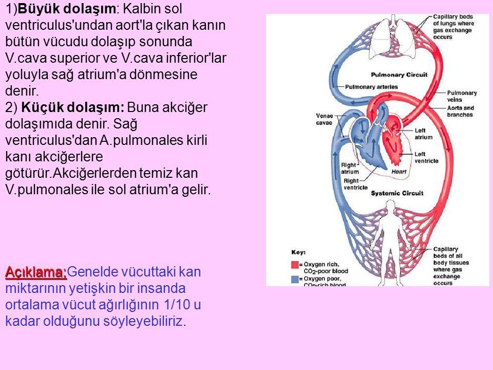 1)Büyük dolaşım: Kalbin sol ventriculus undan aort la çıkan kanın bütün vücudu dolaşıp sonunda V.cava superior ve V.cava inferior lar yoluyla sağ atrium a dönmesine denir.