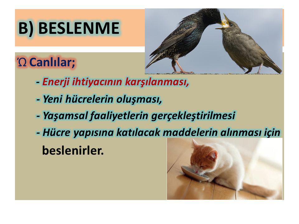B) BESLENME Canlılar; - Enerji ihtiyacının karşılanması, beslenirler.