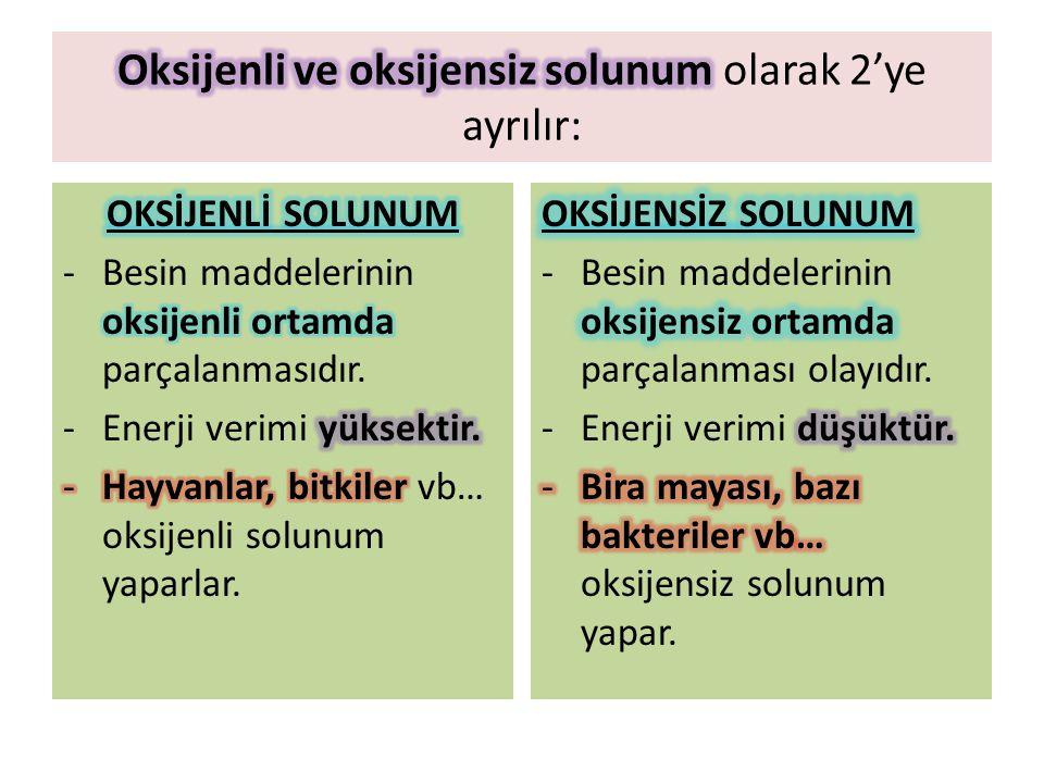 Oksijenli ve oksijensiz solunum olarak 2'ye ayrılır: