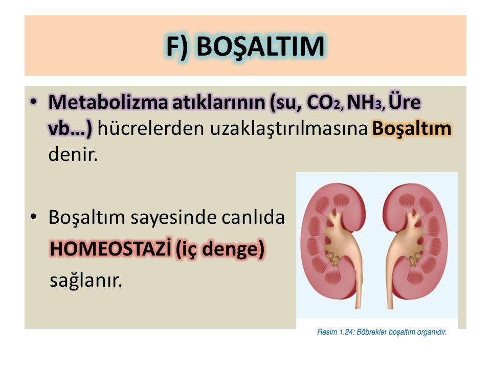 F) BOŞALTIM Metabolizma atıklarının (su, CO2, NH3, Üre vb…) hücrelerden uzaklaştırılmasına Boşaltım denir.