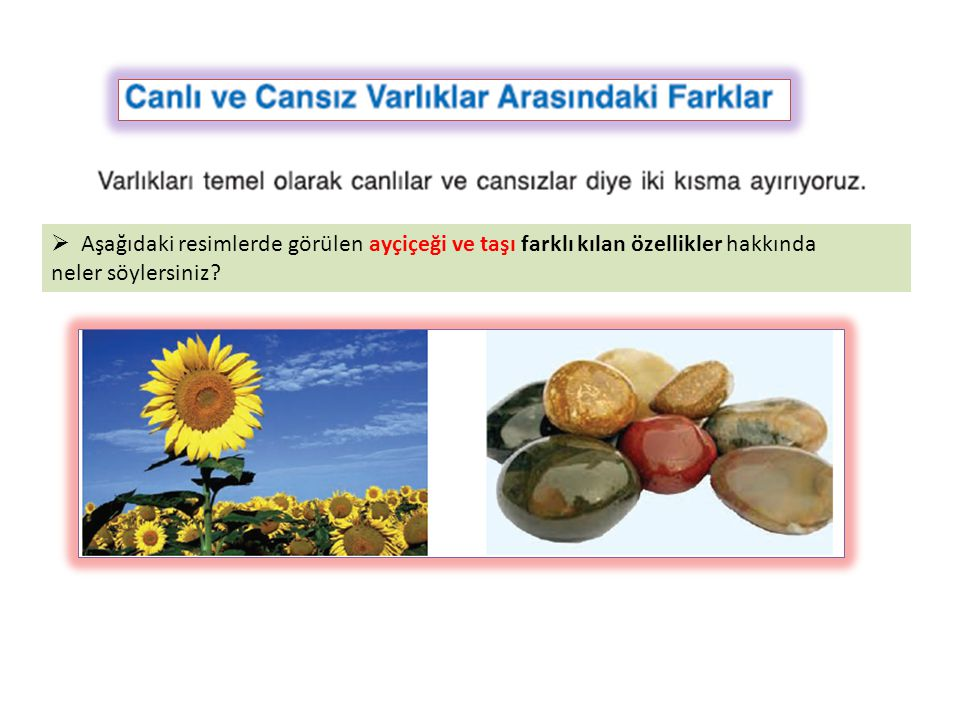 Aşağıdaki resimlerde görülen ayçiçeği ve taşı farklı kılan özellikler hakkında