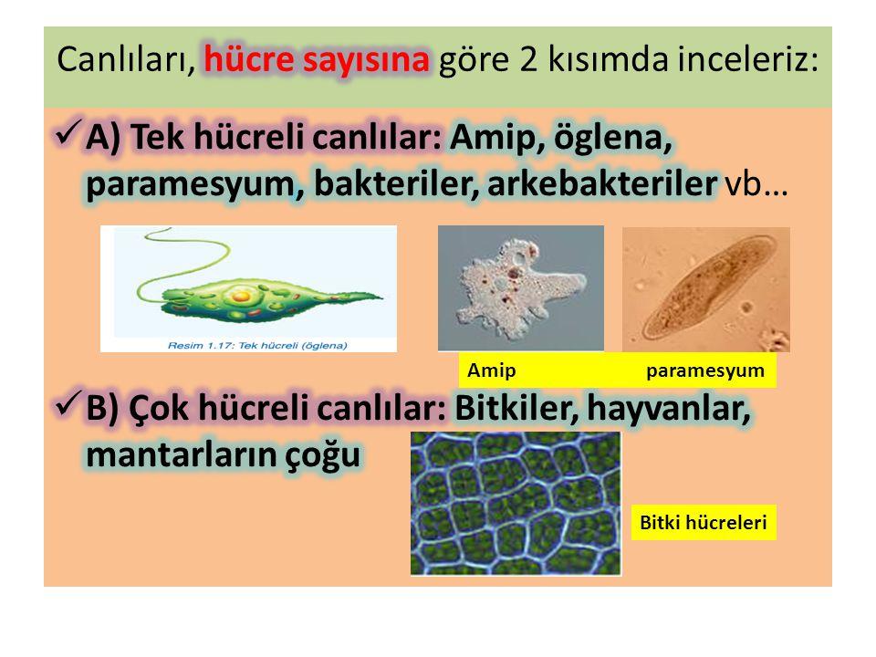 Canlıları, hücre sayısına göre 2 kısımda inceleriz: