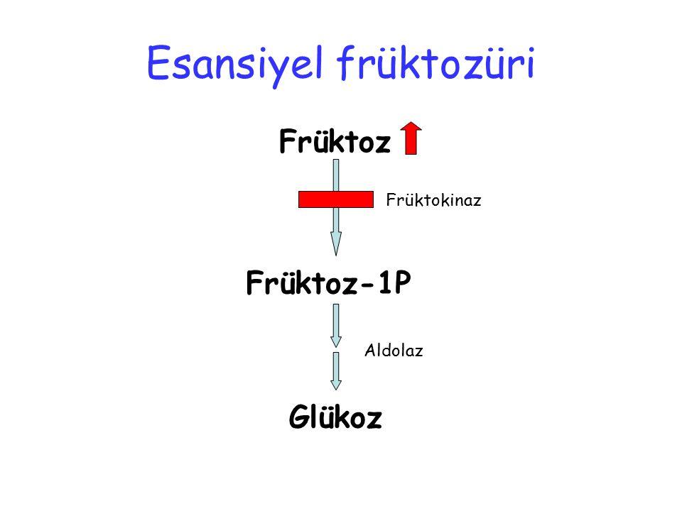 Esansiyel früktozüri Früktoz Früktokinaz Früktoz-1P Aldolaz Glükoz