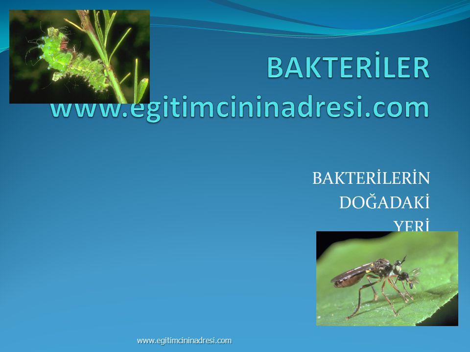 BAKTERİLER www.egitimcininadresi.com