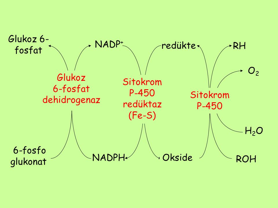 Glukoz 6-fosfat NADP+ redükte. RH. O2. Glukoz. 6-fosfat. dehidrogenaz. Sitokrom. P-450 redüktaz (Fe-S)
