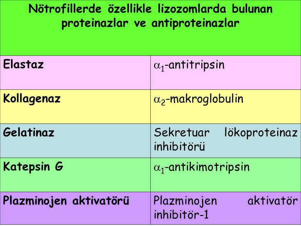 Nötrofillerde özellikle lizozomlarda bulunan proteinazlar ve antiproteinazlar