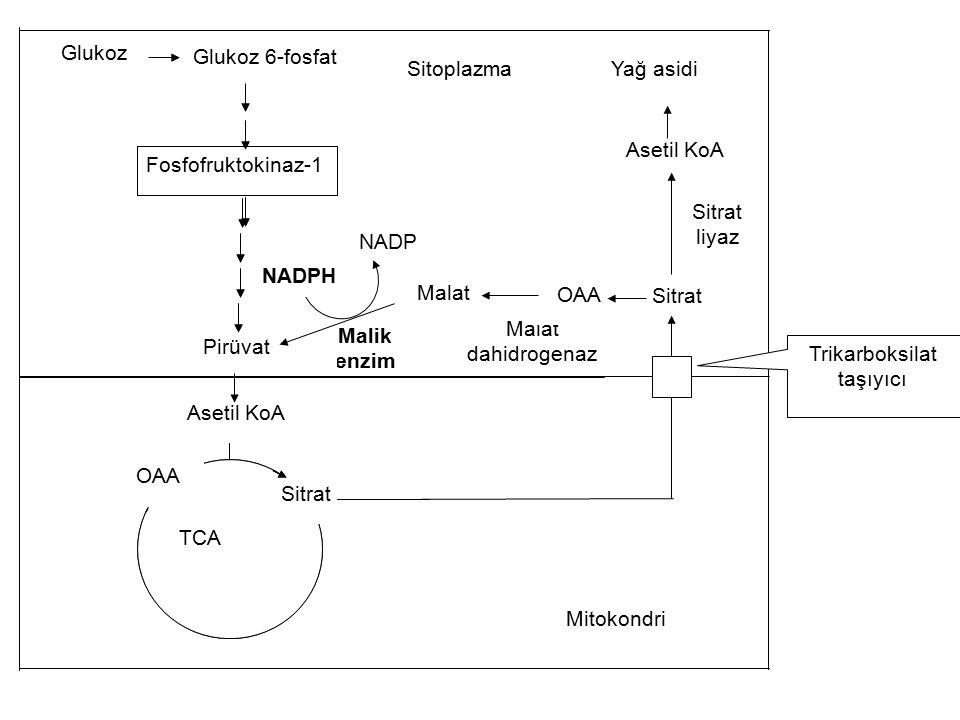 Sitoplazma NADP NADPH Malik enzim Malat dahidrogenaz OAA Sitrat liyaz