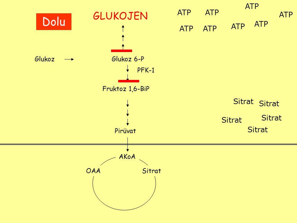 Dolu GLUKOJEN ATP ATP ATP ATP ATP ATP ATP ATP Sitrat Sitrat Sitrat