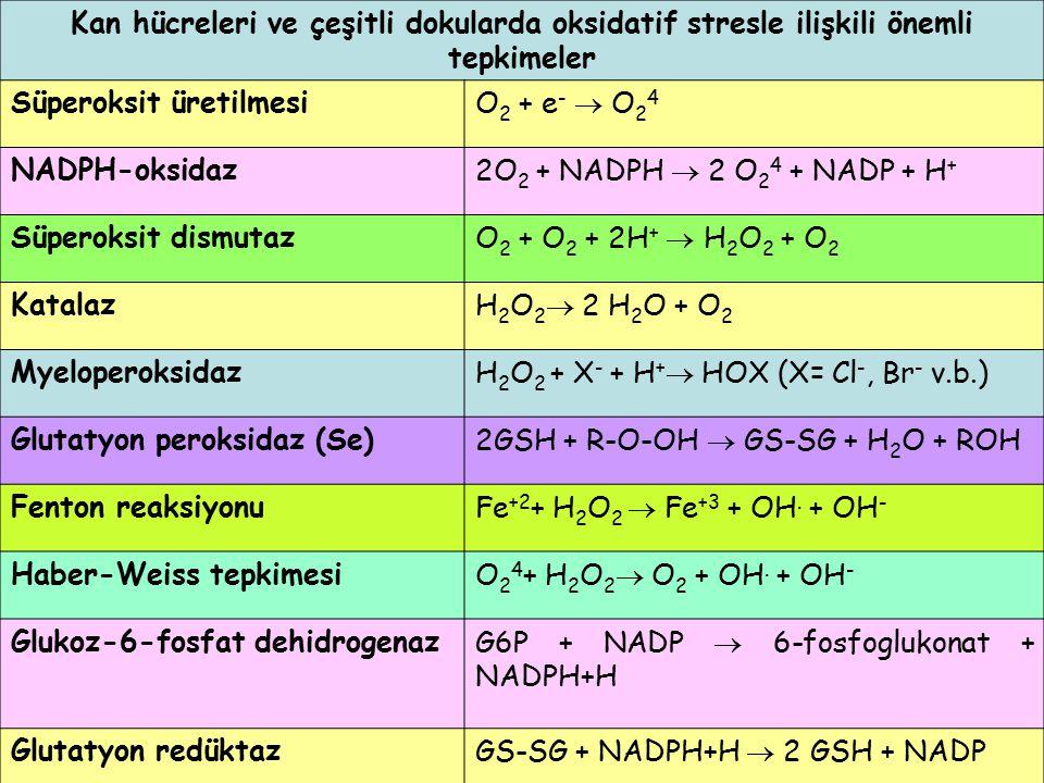 Kan hücreleri ve çeşitli dokularda oksidatif stresle ilişkili önemli tepkimeler