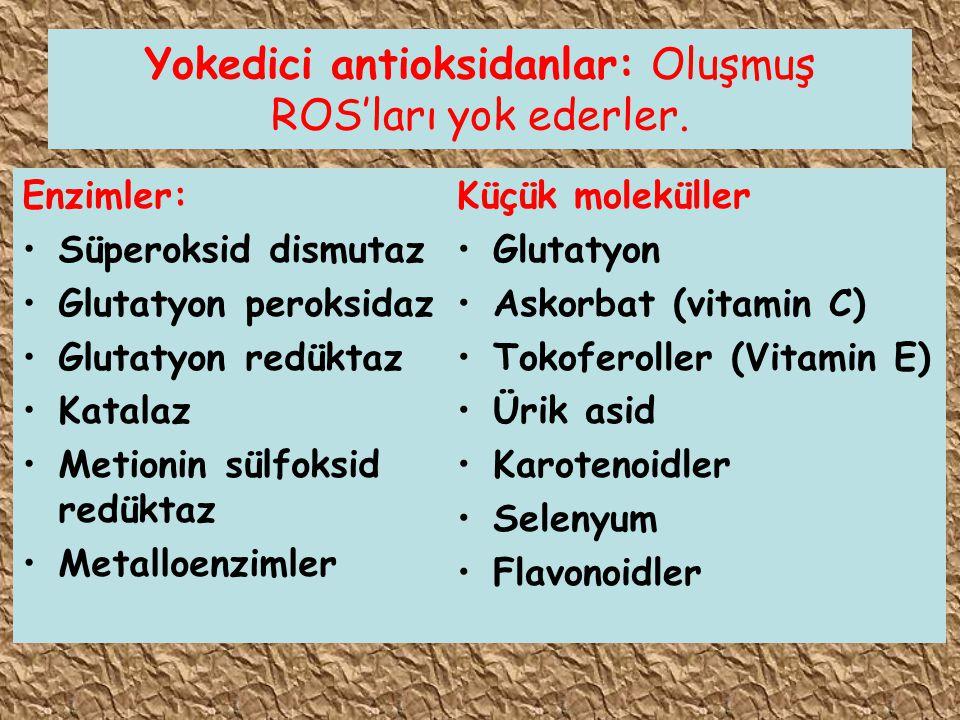 Yokedici antioksidanlar: Oluşmuş ROS'ları yok ederler.