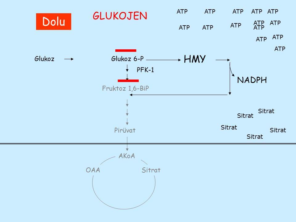 Dolu GLUKOJEN HMY NADPH Glukoz Glukoz 6-P PFK-1 Fruktoz 1,6-BiP