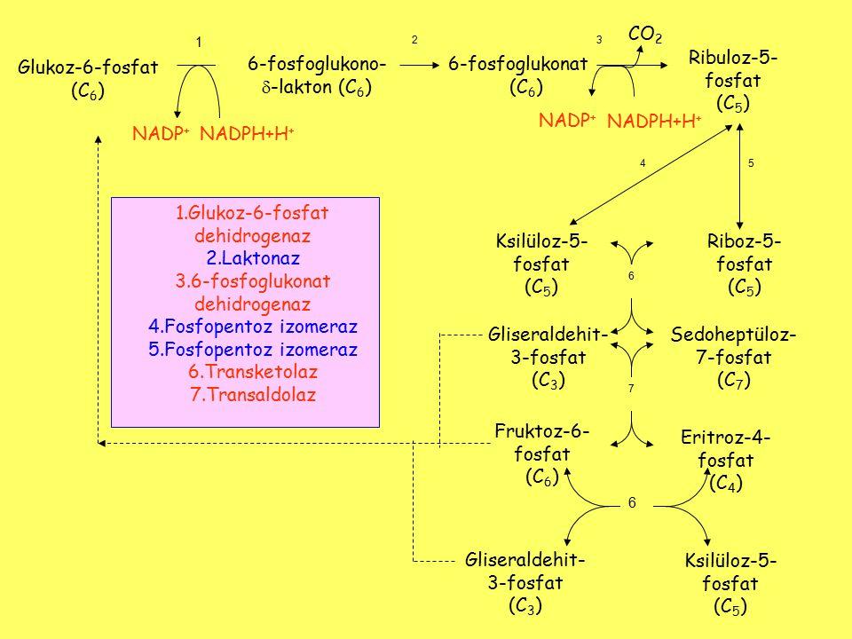 6-fosfoglukono- -lakton (C6) 6-fosfoglukonat (C6) Ribuloz-5-fosfat