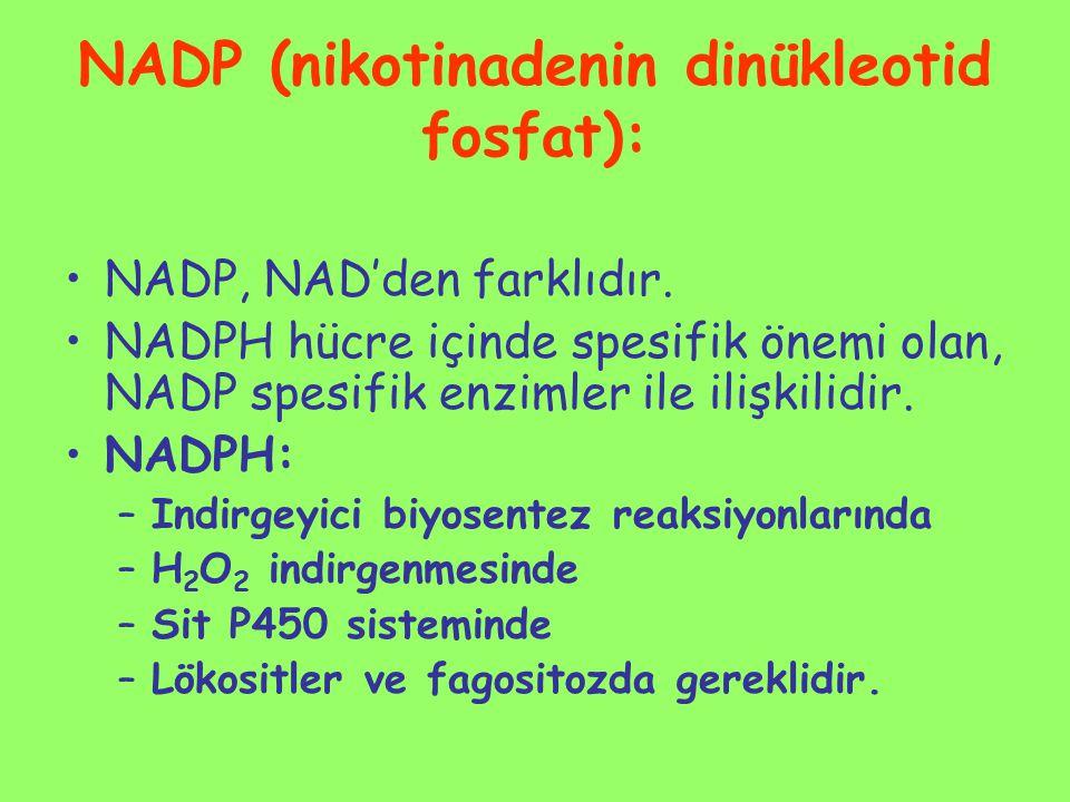 NADP (nikotinadenin dinükleotid fosfat):