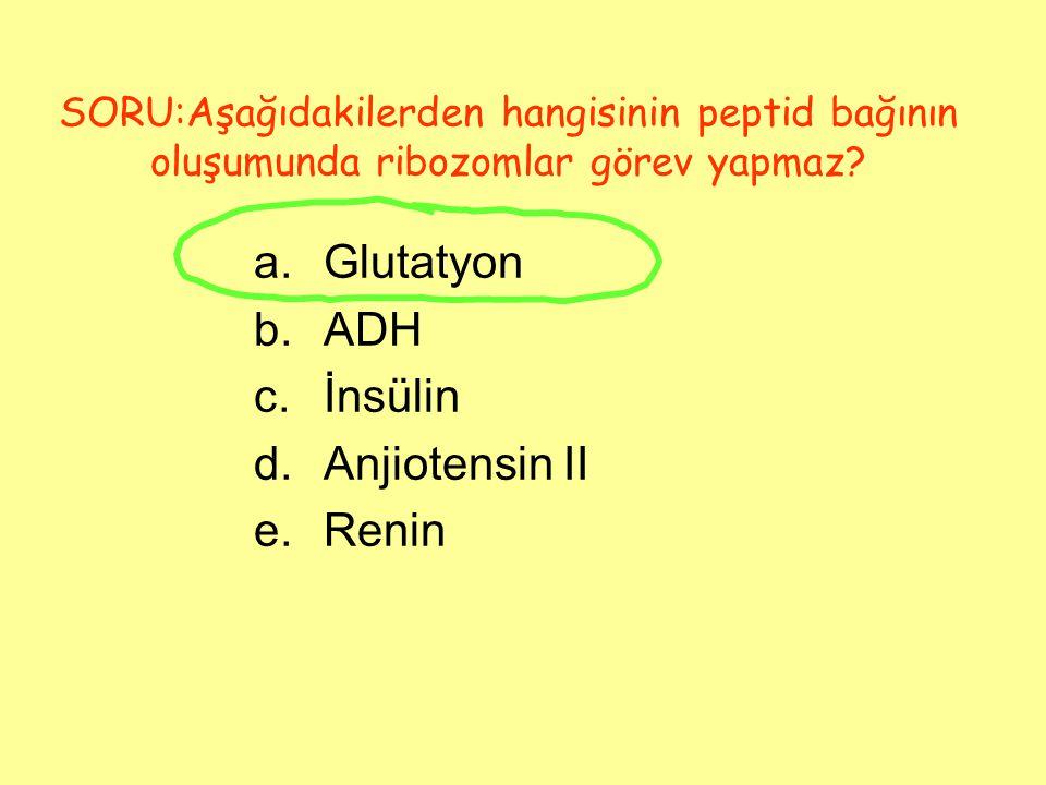 Glutatyon ADH İnsülin Anjiotensin II Renin