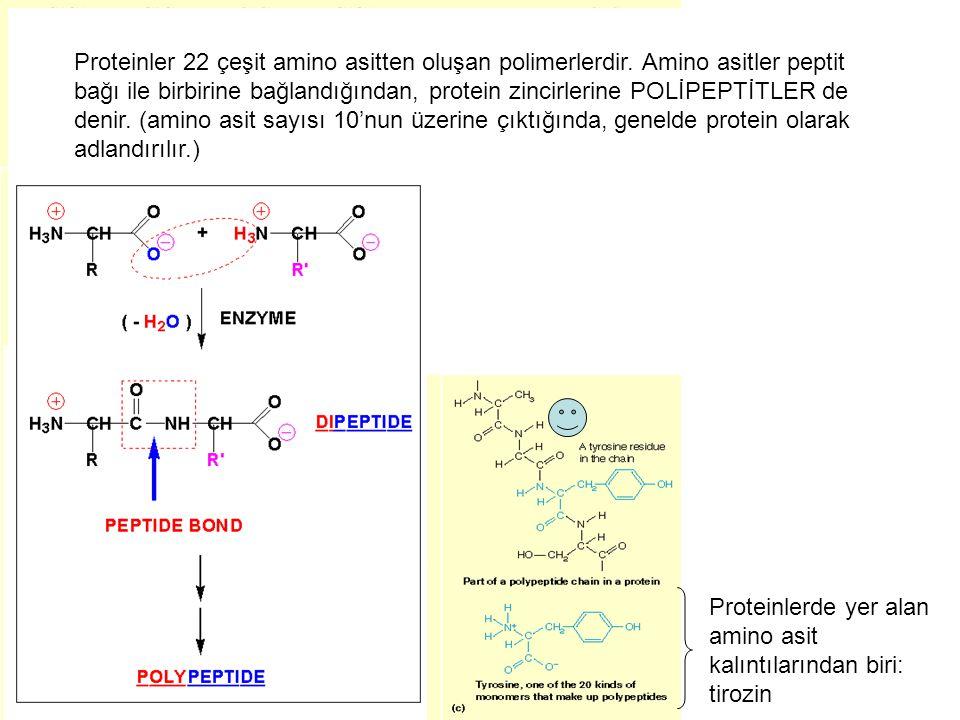 Proteinler 22 çeşit amino asitten oluşan polimerlerdir