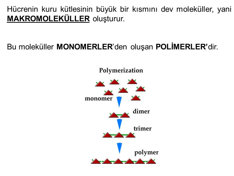 Hücrenin kuru kütlesinin büyük bir kısmını dev moleküller, yani MAKROMOLEKÜLLER oluşturur.