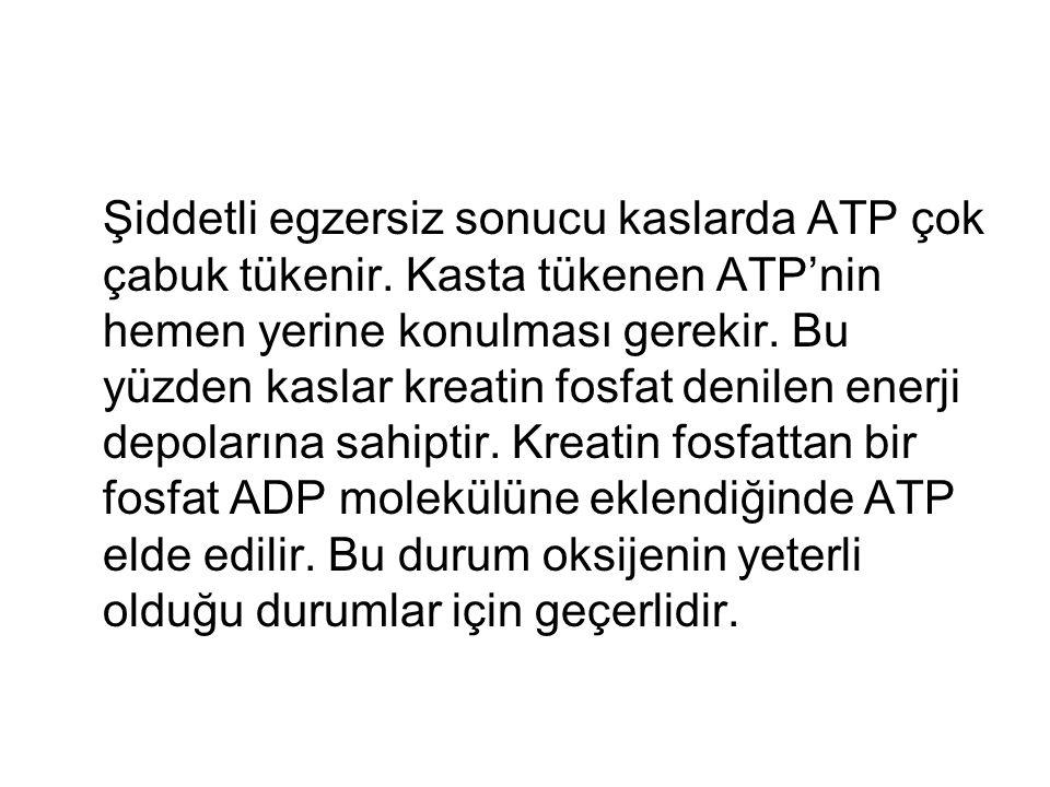Şiddetli egzersiz sonucu kaslarda ATP çok çabuk tükenir