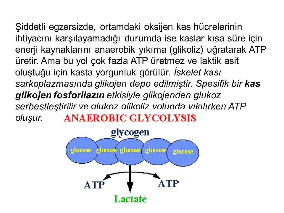 Şiddetli egzersizde, ortamdaki oksijen kas hücrelerinin ihtiyacını karşılayamadığı durumda ise kaslar kısa süre için enerji kaynaklarını anaerobik yıkıma (glikoliz) uğratarak ATP üretir.