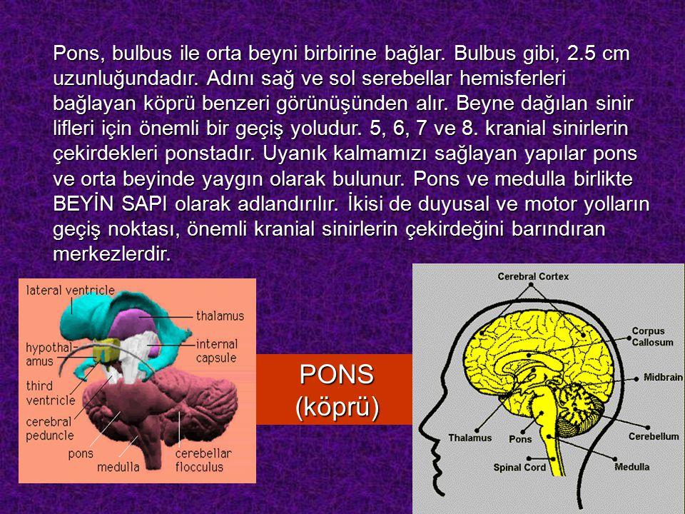 Pons, bulbus ile orta beyni birbirine bağlar. Bulbus gibi, 2
