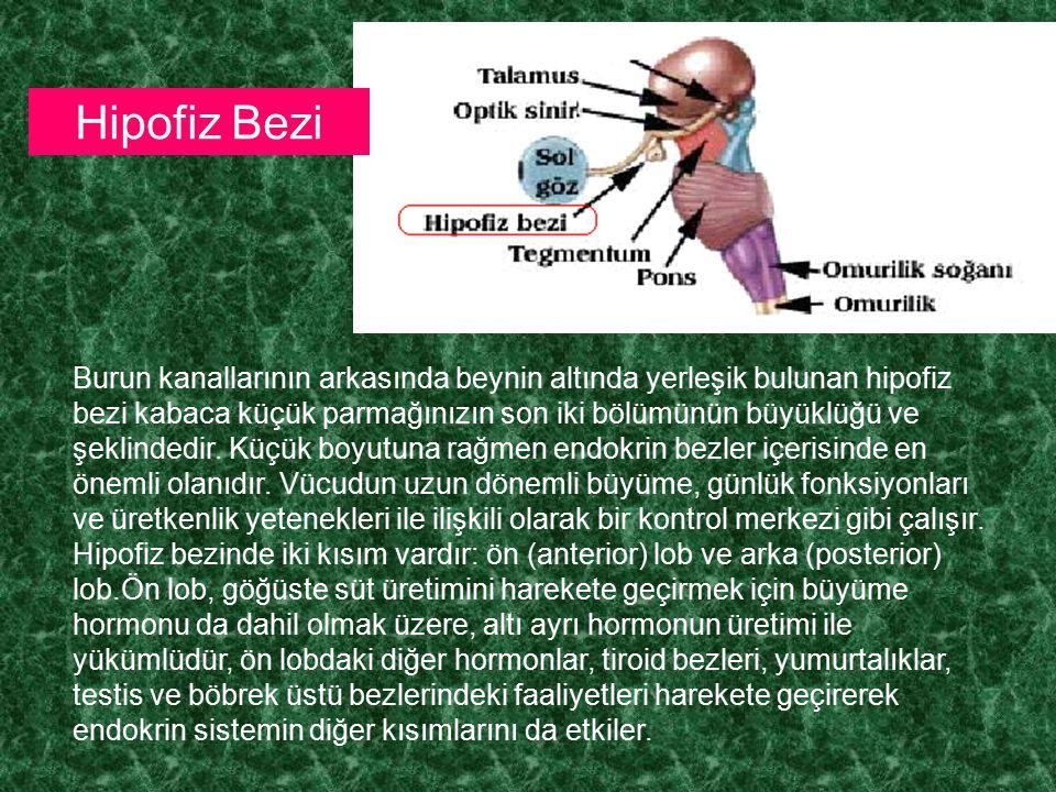 Hipofiz Bezi
