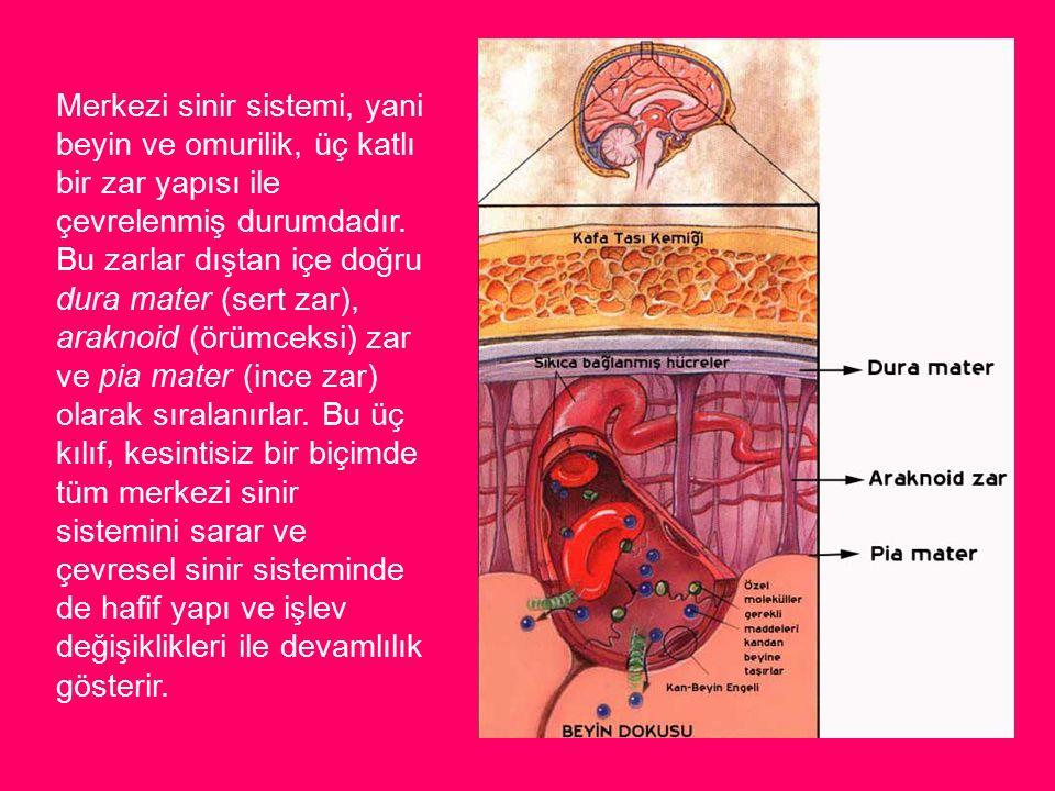 Merkezi sinir sistemi, yani beyin ve omurilik, üç katlı bir zar yapısı ile çevrelenmiş durumdadır.