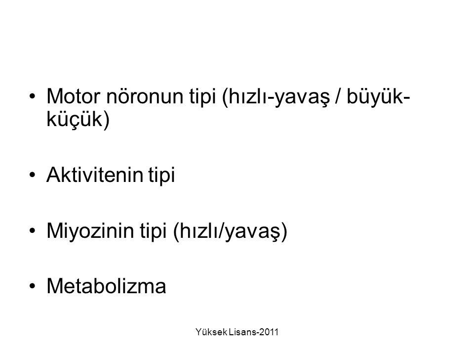 Motor nöronun tipi (hızlı-yavaş / büyük-küçük)