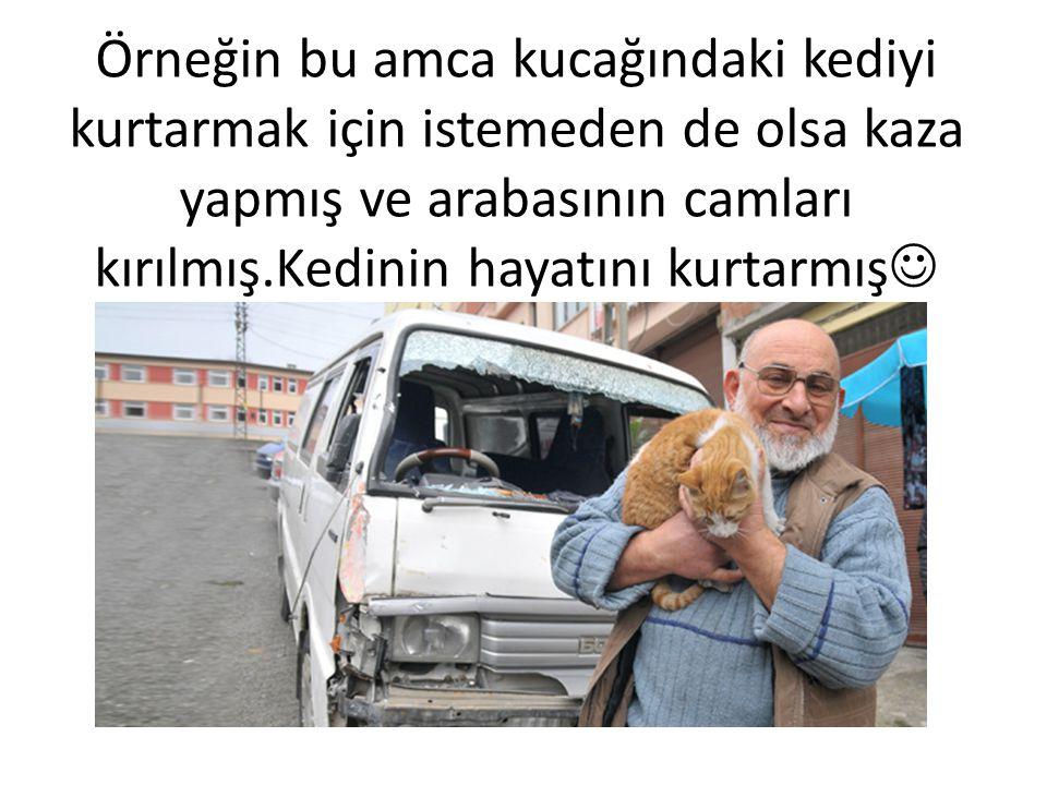 Örneğin bu amca kucağındaki kediyi kurtarmak için istemeden de olsa kaza yapmış ve arabasının camları kırılmış.Kedinin hayatını kurtarmış