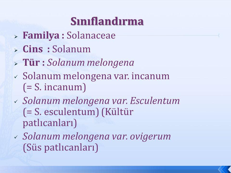 Sınıflandırma Familya : Solanaceae Cins : Solanum