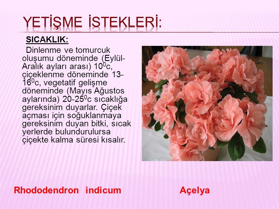 YETİŞME İSTEKLERİ: Rhododendron indicum Açelya