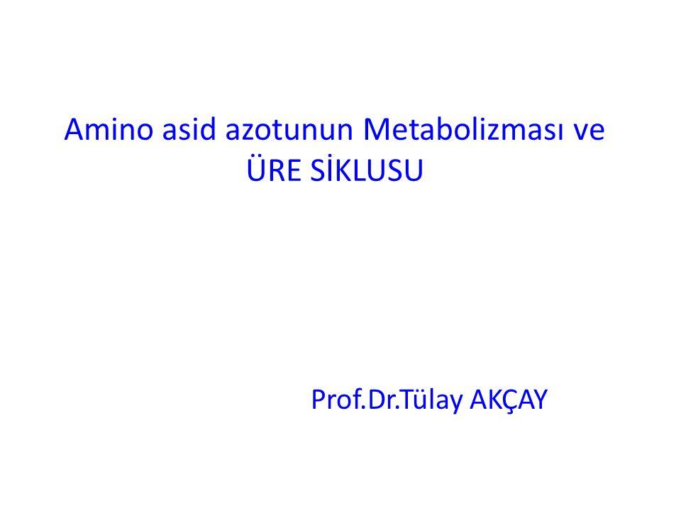 Amino asid azotunun Metabolizması ve ÜRE SİKLUSU