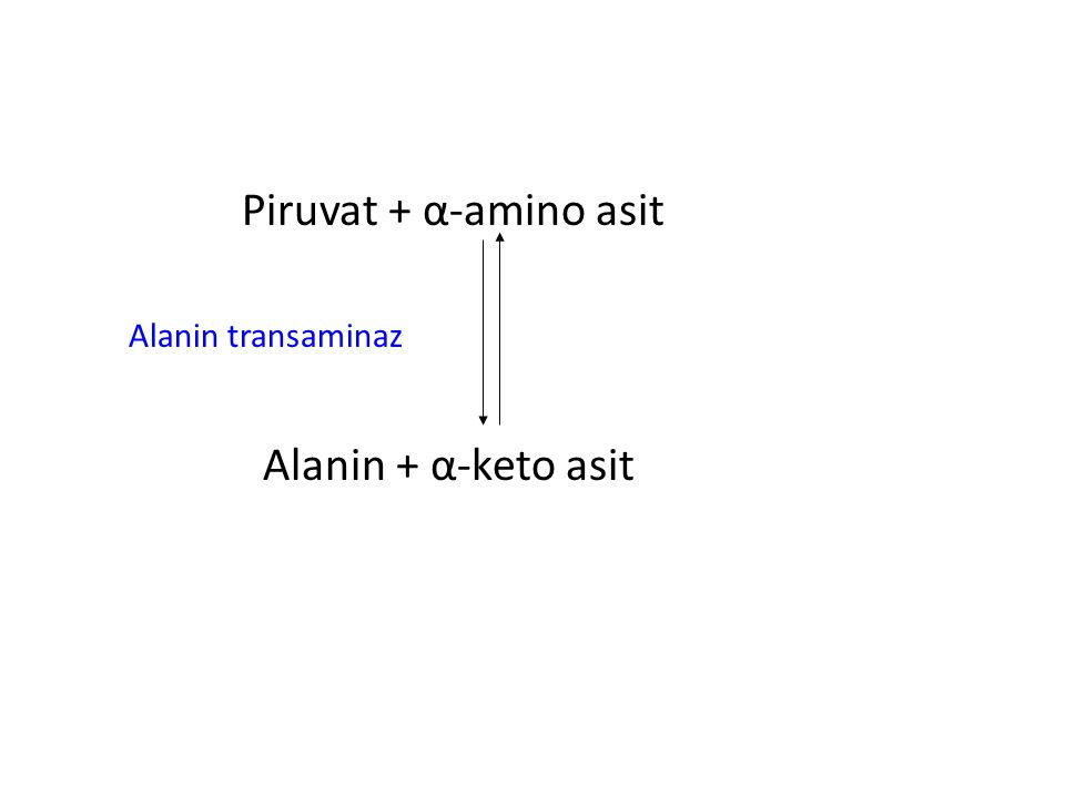 Piruvat + α-amino asit Alanin transaminaz Alanin + α-keto asit