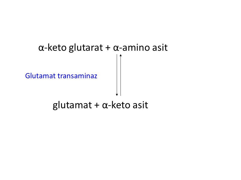 α-keto glutarat + α-amino asit