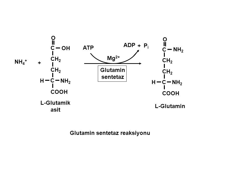 Glutamin sentetaz reaksiyonu