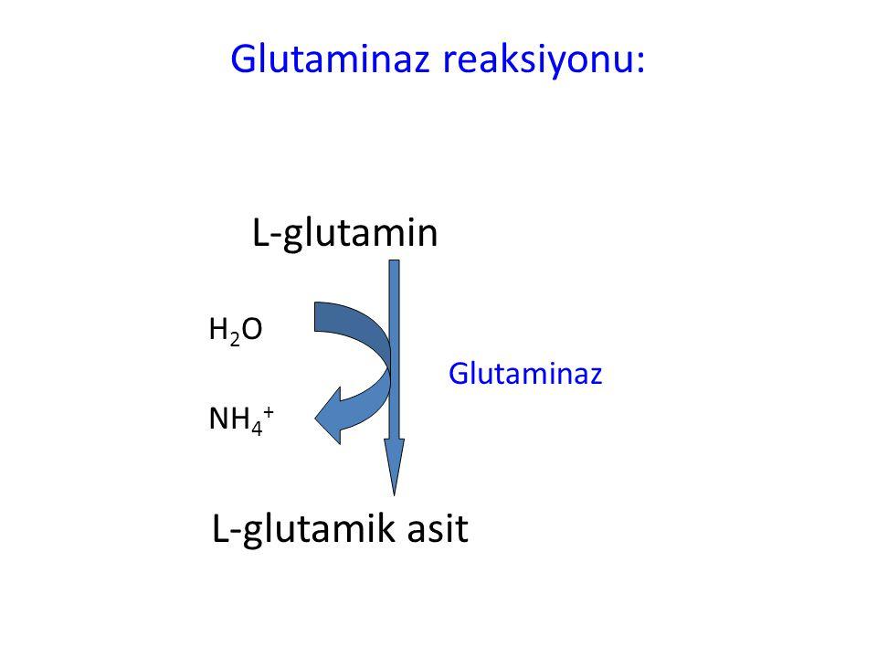 Glutaminaz reaksiyonu: