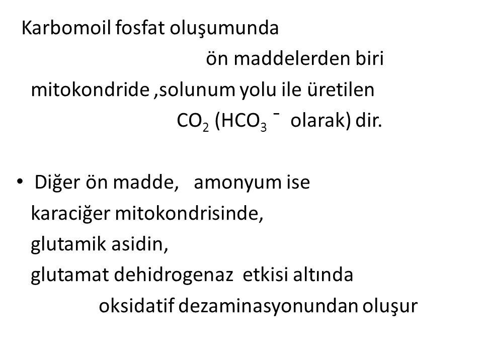 Karbomoil fosfat oluşumunda