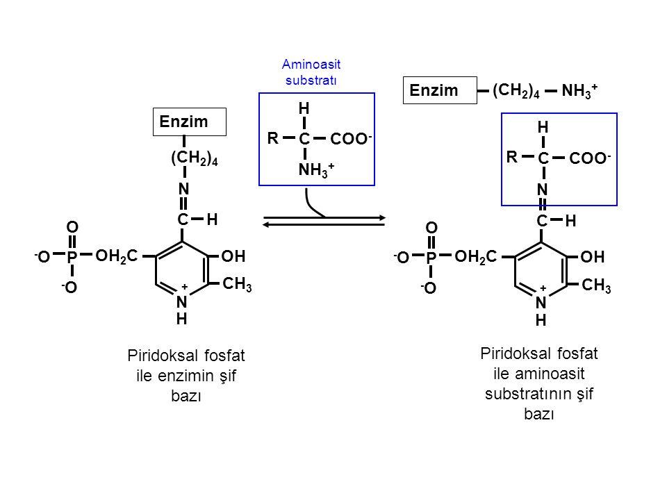 Piridoksal fosfat ile enzimin şif bazı