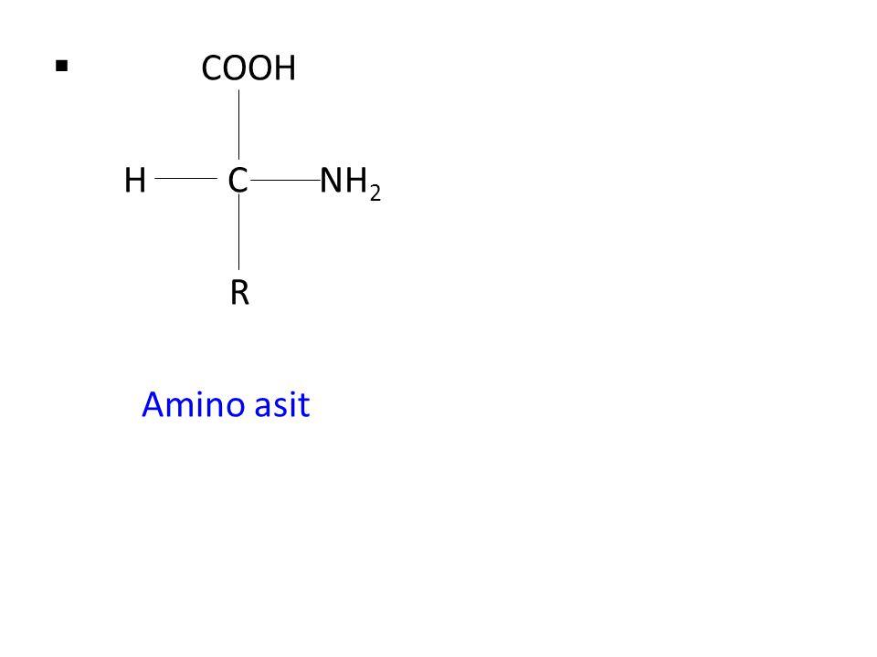 COOH H C NH2 R Amino asit