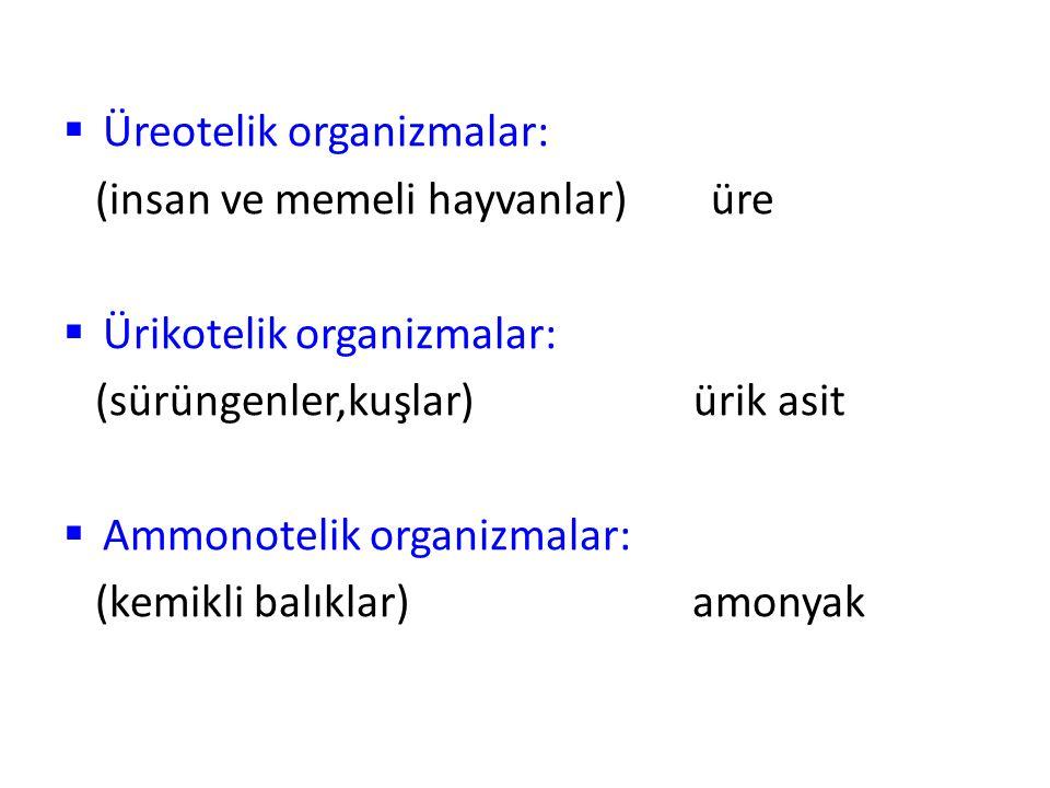 Üreotelik organizmalar: