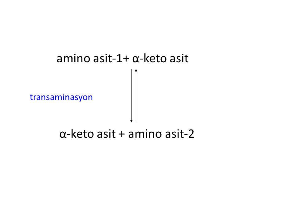 amino asit-1+ α-keto asit