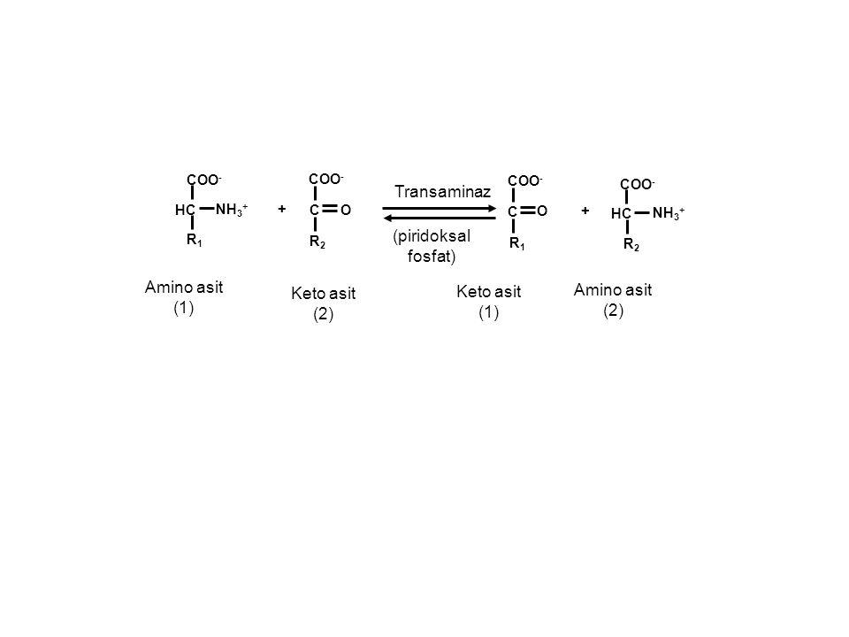 Transaminaz (piridoksal fosfat) Amino asit Amino asit Keto asit