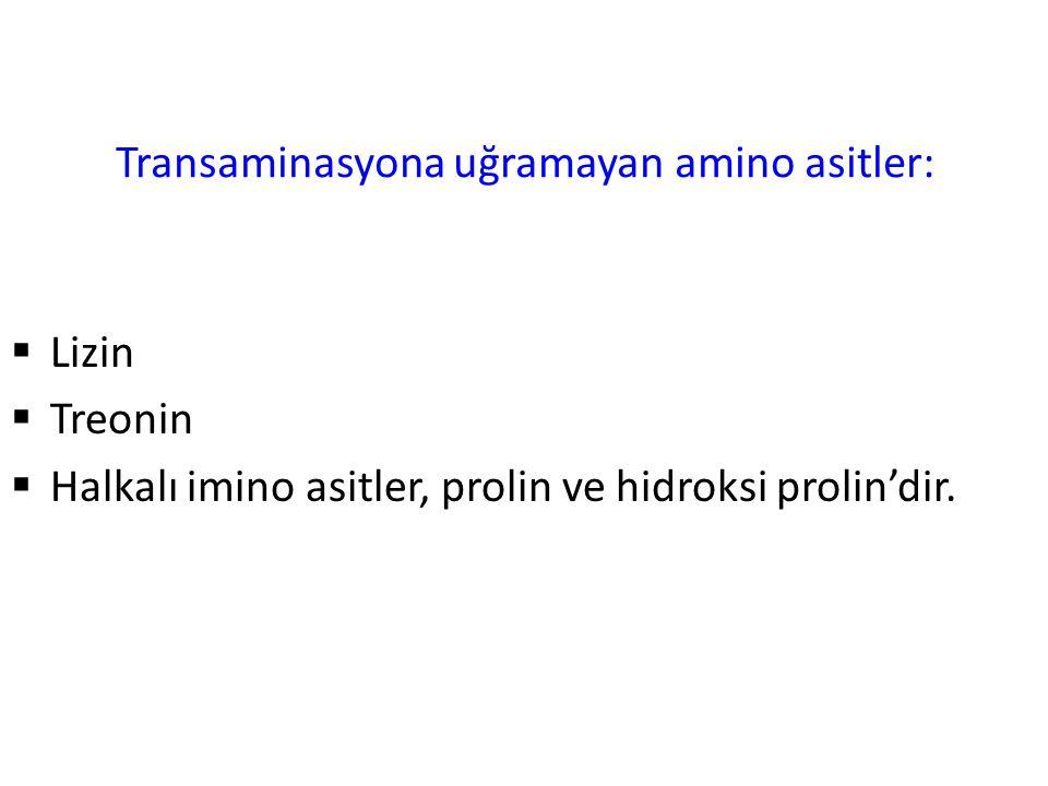 Transaminasyona uğramayan amino asitler: