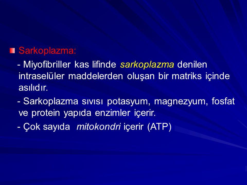 Sarkoplazma: - Miyofibriller kas lifinde sarkoplazma denilen intraselüler maddelerden oluşan bir matriks içinde asılıdır.