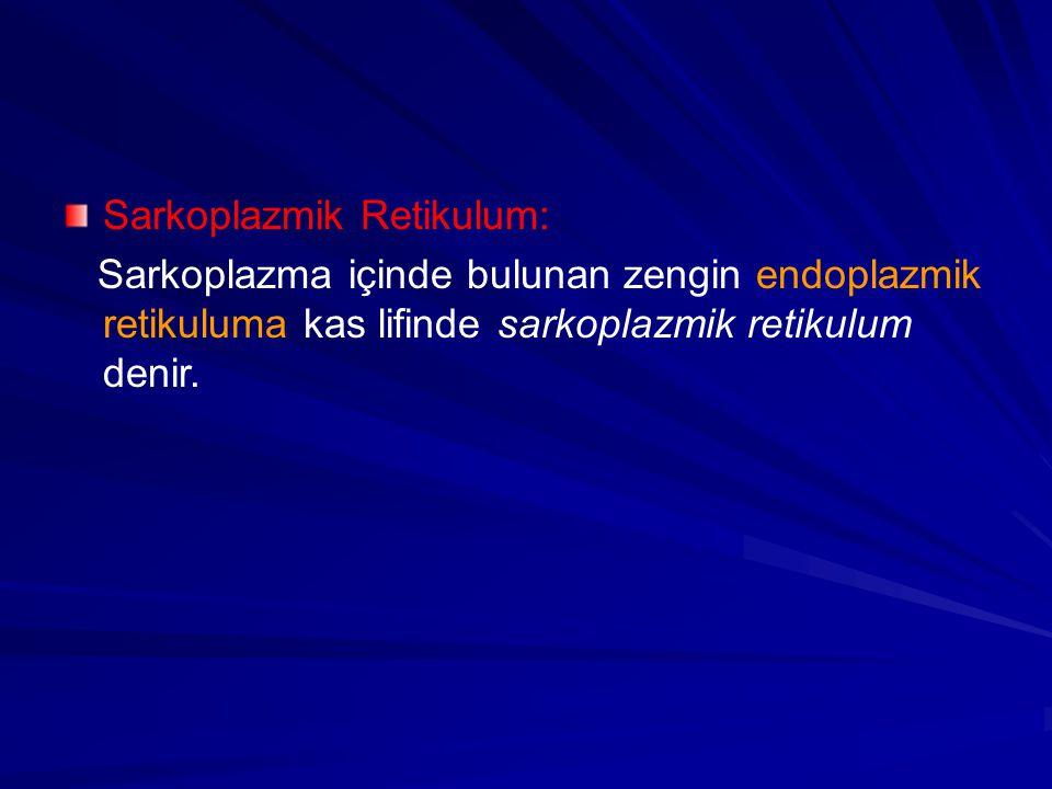 Sarkoplazmik Retikulum: