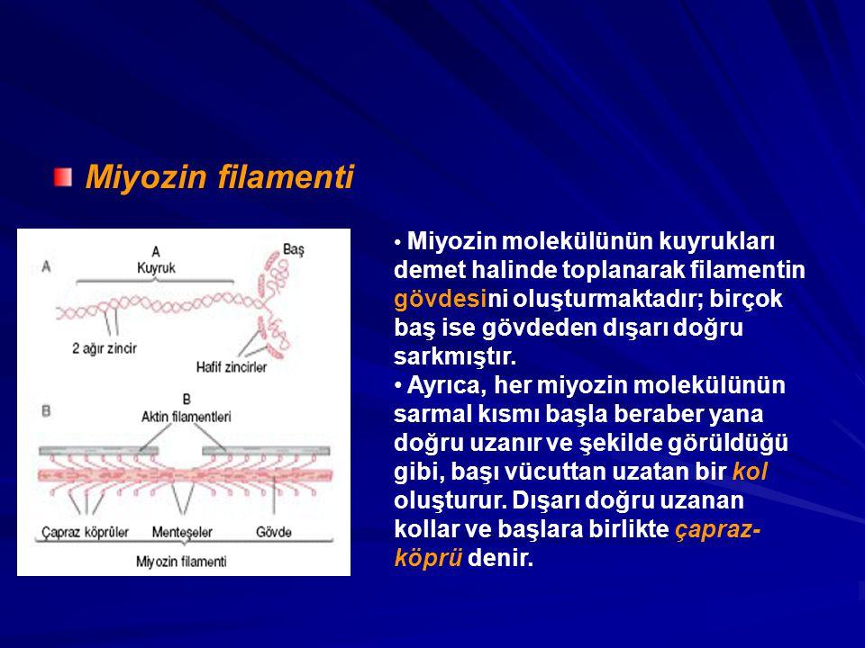 Miyozin filamenti