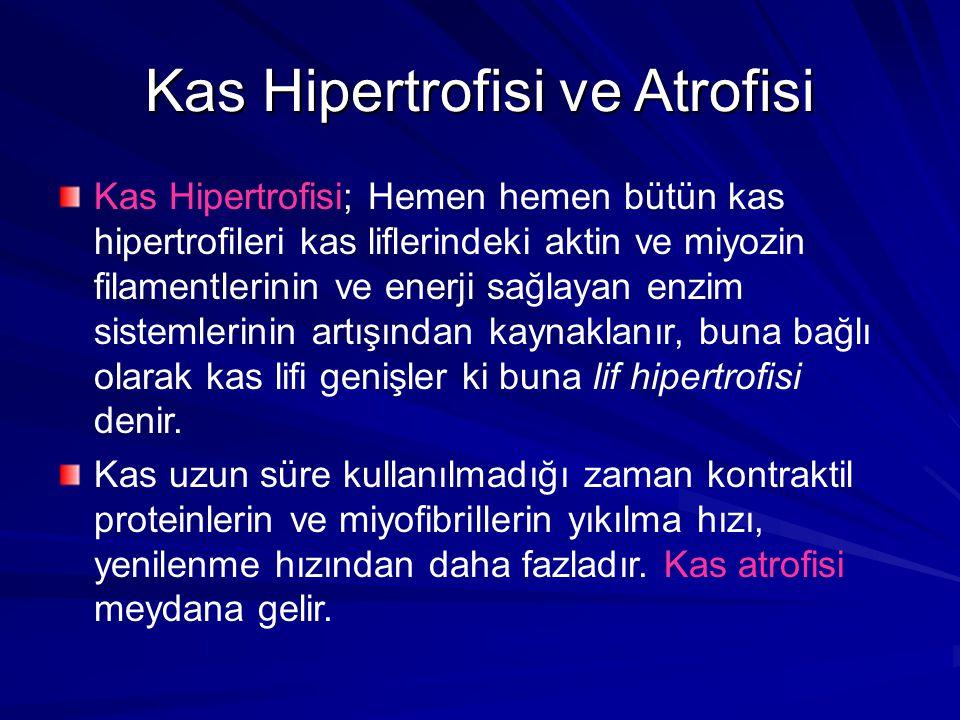 Kas Hipertrofisi ve Atrofisi