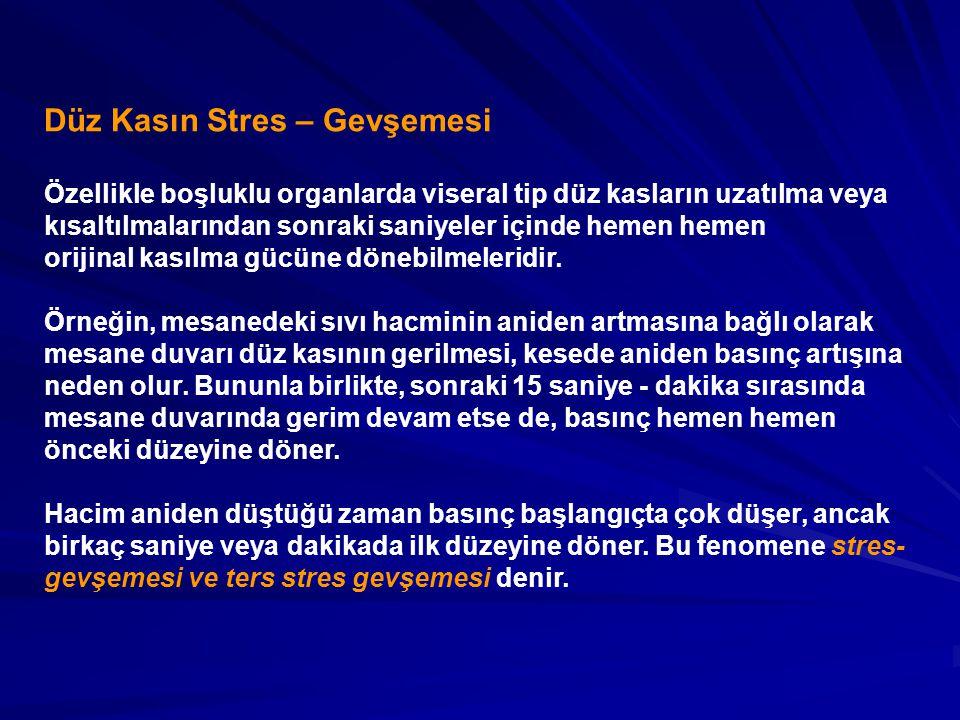 Düz Kasın Stres – Gevşemesi