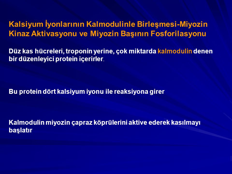 Kalsiyum İyonlarının Kalmodulinle Birleşmesi-Miyozin Kinaz Aktivasyonu ve Miyozin Başının Fosforilasyonu