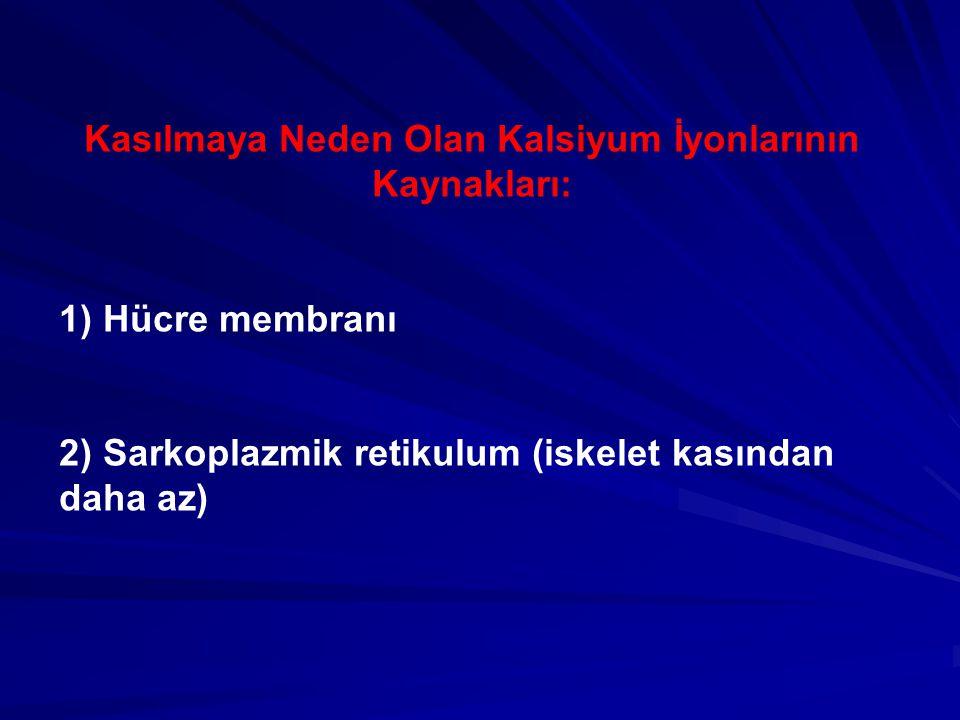 Kasılmaya Neden Olan Kalsiyum İyonlarının Kaynakları: