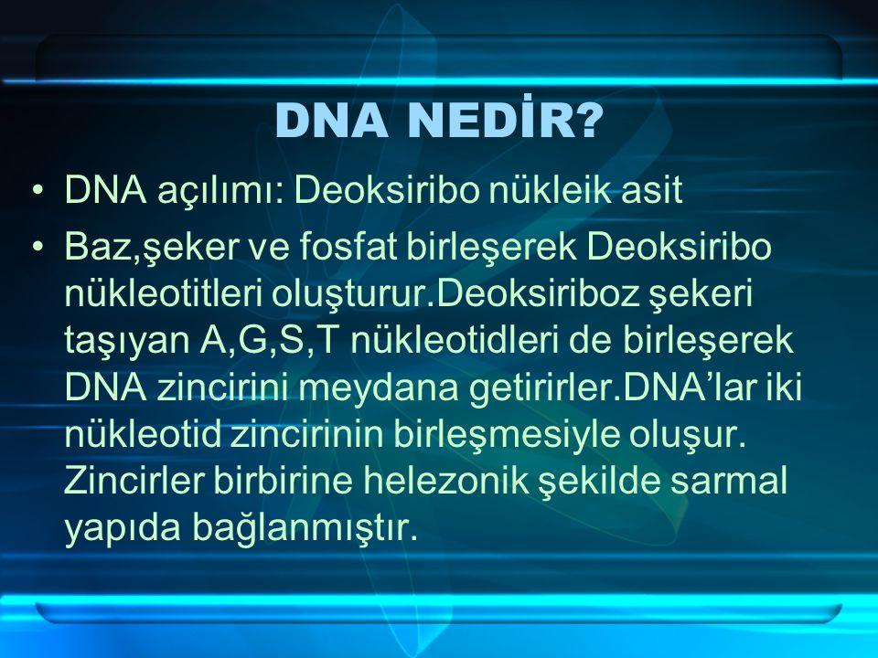 DNA NEDİR DNA açılımı: Deoksiribo nükleik asit
